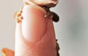 cute-reptiles-108__605