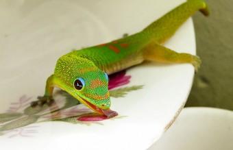 cute-reptiles-1111__605