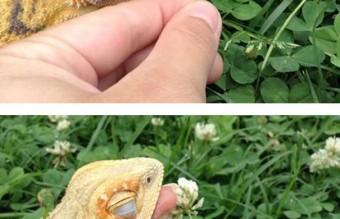 cute-reptiles-1131__605 (1)