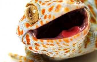 cute-reptiles-115__605