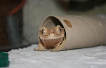 cute-reptiles-116__605