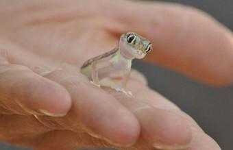 cute-reptiles-117__605