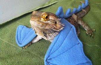 cute-reptiles-119__605