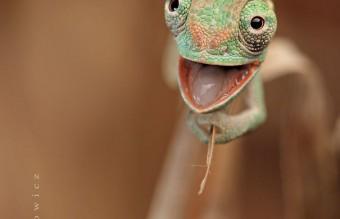 cute-reptiles-161__605