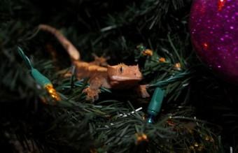 cute-reptiles-18__605