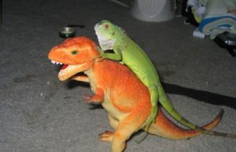 cute-reptiles-21__605