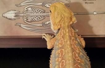 cute-reptiles-51__605