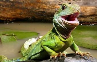 cute-reptiles-91__605