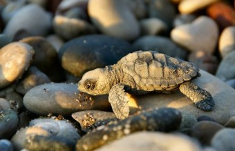 cute-turtle-reptile-photography-5535-1920x10801__605
