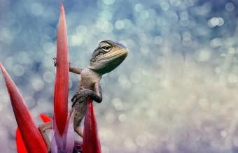 flower-reptiles-animals-1697785-1920x1200__605