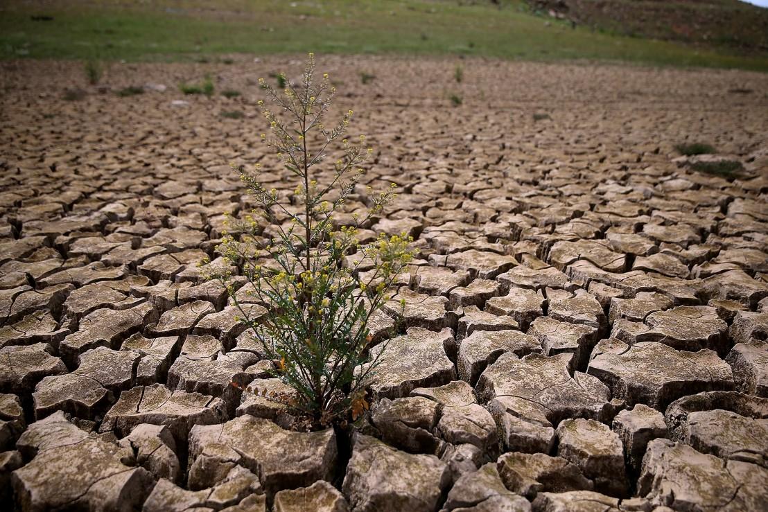 земя, суша