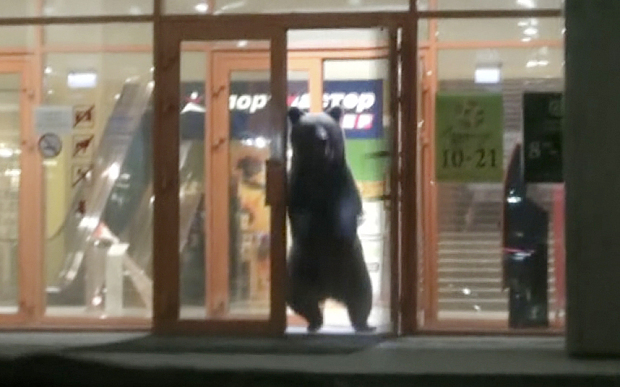 Russia Bear on Streets