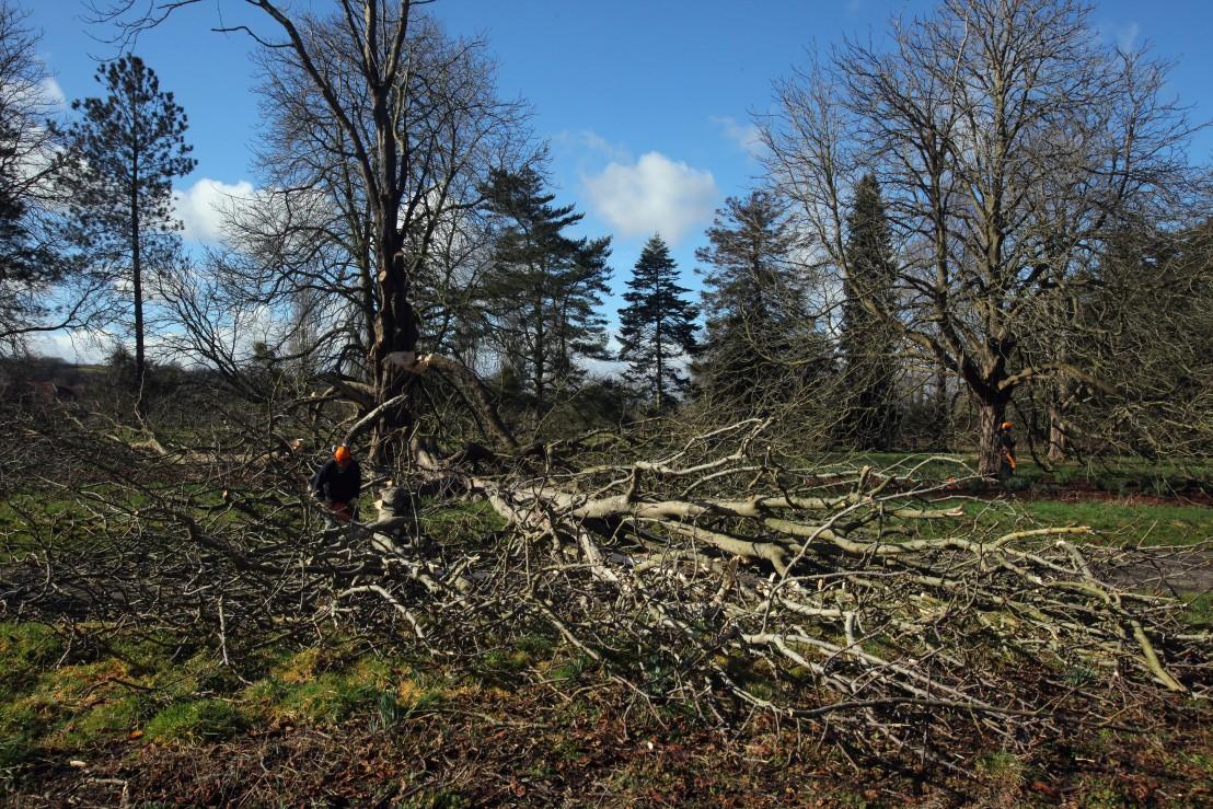 сеч, гора, изсичане на дървета