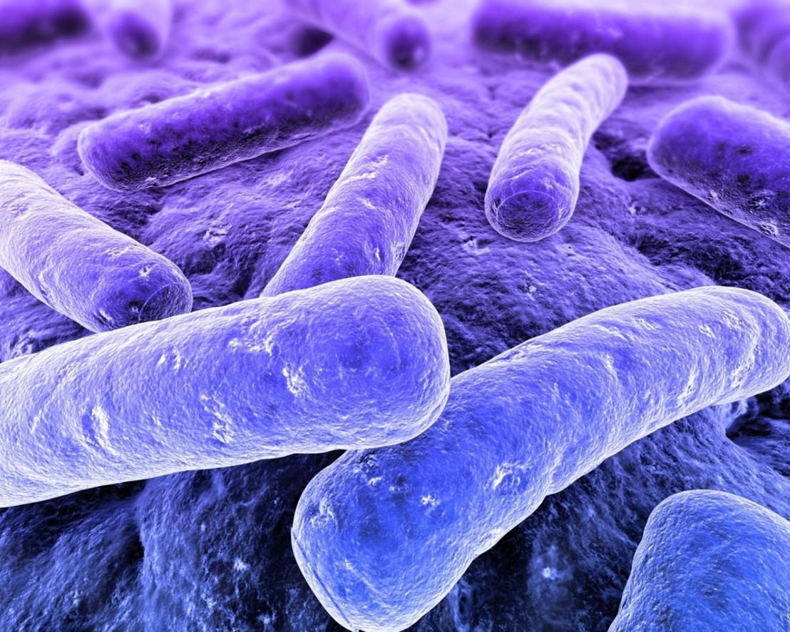 бактерии, микроорганизми