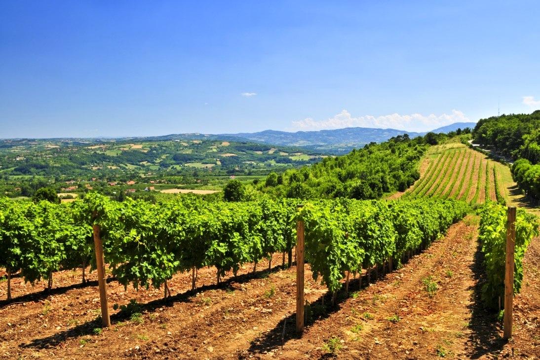 wine-tour-of-serbia_2_viticulture-serbia