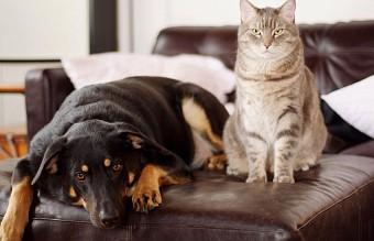 куче, котка