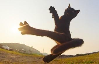 котки нинджа