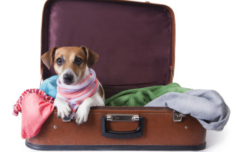 dog lying in a suitcase for traveling