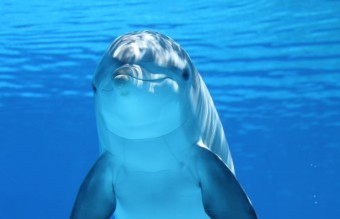 dolphin-marine-mammals-water-sea-64219