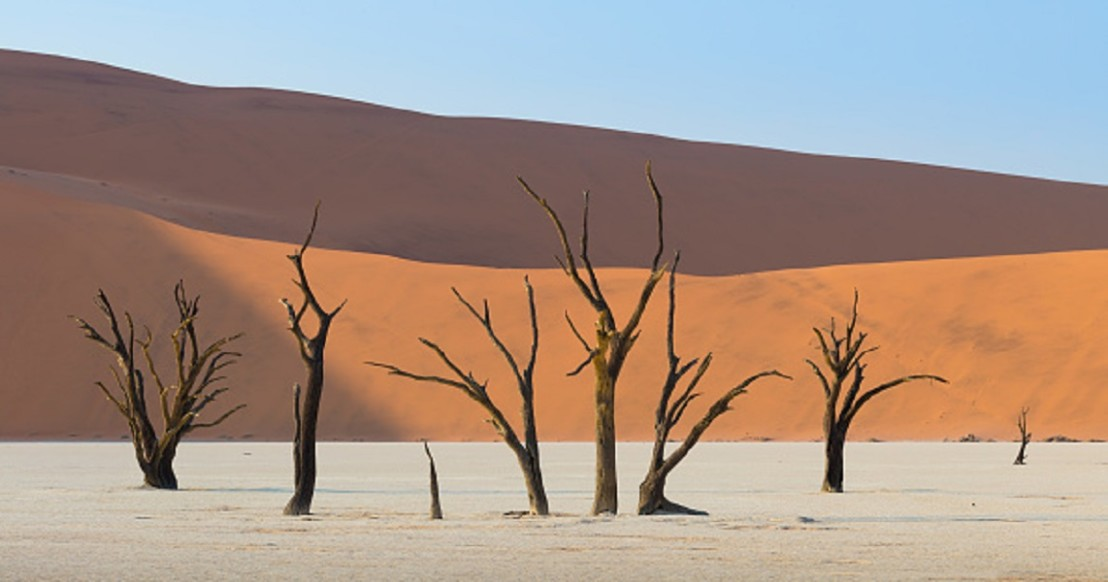 Surreal Landscapes Of 900-Year-Old Trees Look Like Another Planet