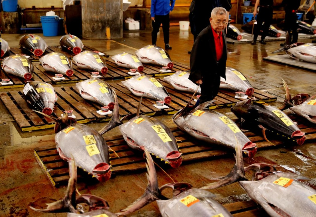 A wholesaler checks the quality of fresh tuna displayed at the last tuna auctions at the Tsukiji fish market before it moves to the new Toyosu market in Tokyo