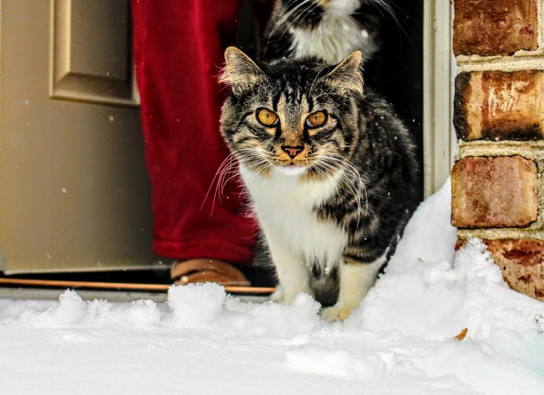 cat, snow