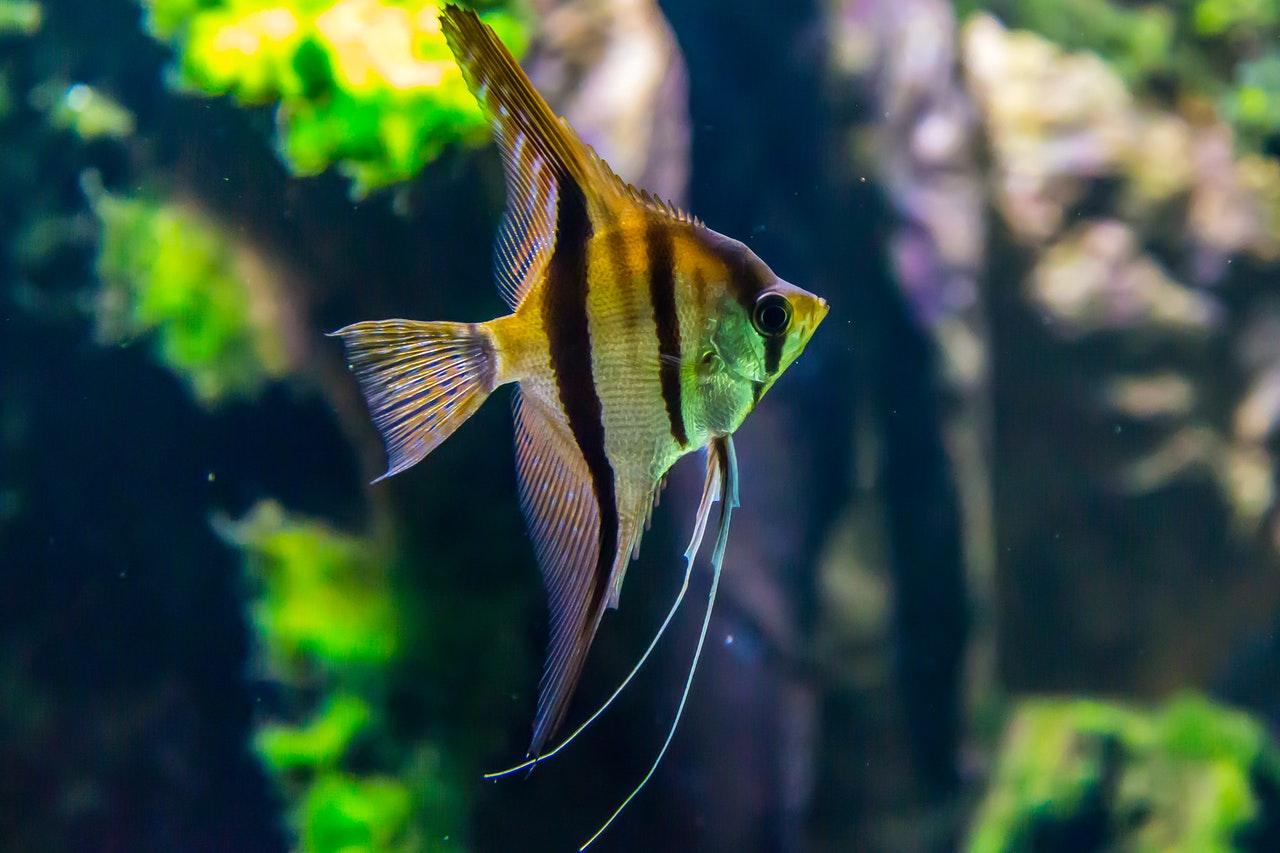 animal-aquarium-aquatic-1677116