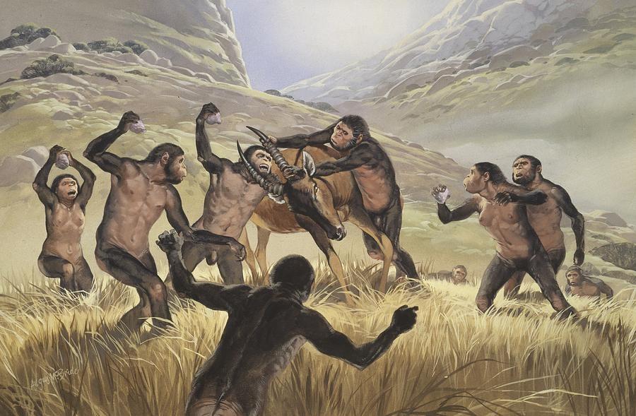 1-homo-habilis-hunting-artwork-science-photo-library