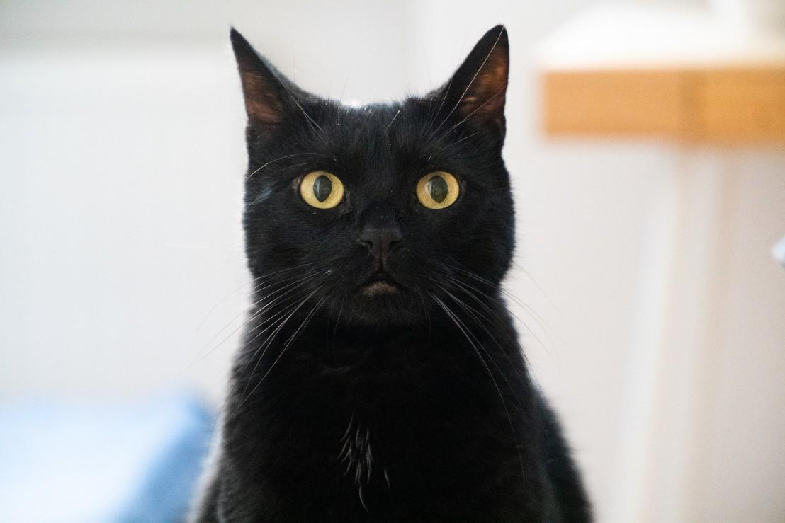 cat-4445522_1920