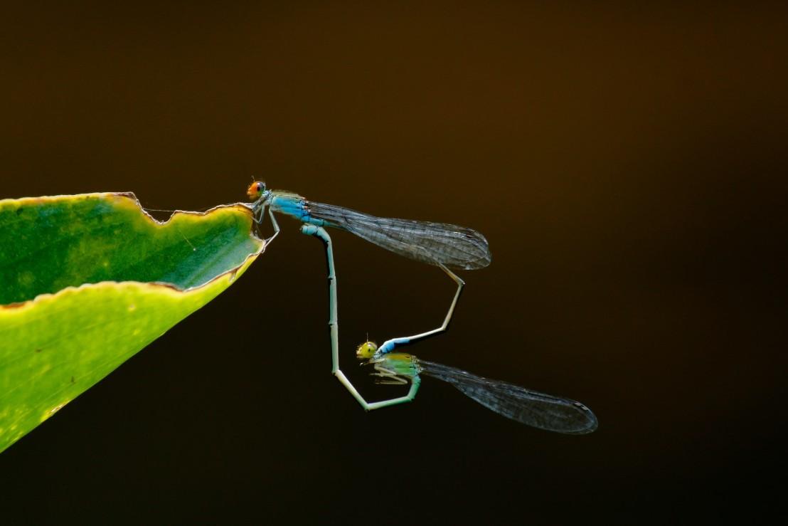 animal-biology-close-up-1020566