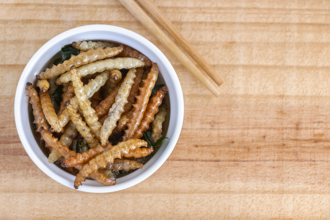 Bamboo edible worm insects crispy or Bamboo Caterpillar in white bowl on a wood table. The concept of protein food sources from insects. It is a good source of protein, vitamin, and fiber.