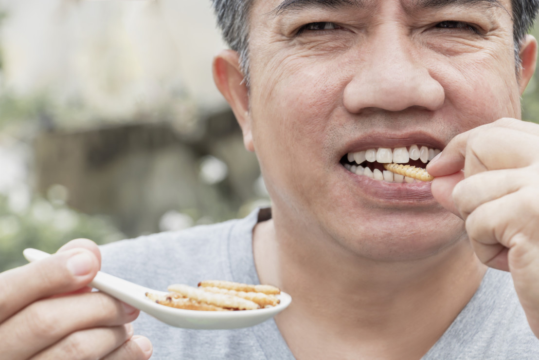 Food Insect: Man hand holding spoon eating Bamboo Worm insect or Bamboo Caterpillar deep-fried as food on white background, is good source of meal high protein edible for future. Entomophagy concept.