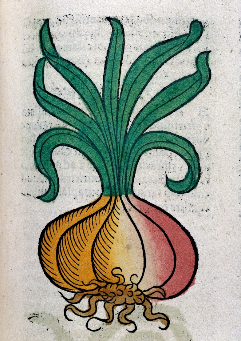 L0029214 An onion, woodcut, 1547