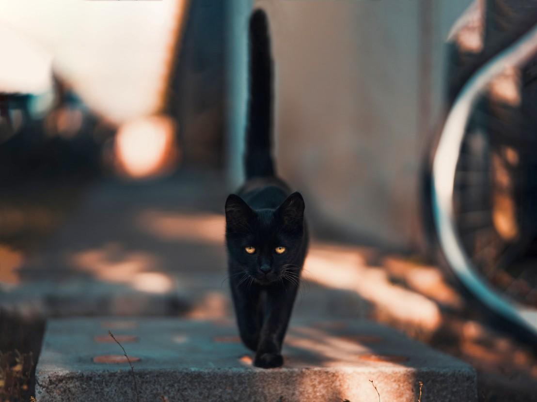 black-cat-walking-on-road-1510543