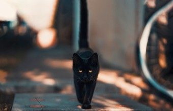 black-cat-walking-on-road-1510543