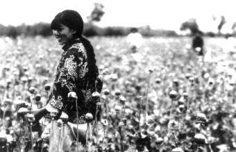Manchukuo-poppy_harvest