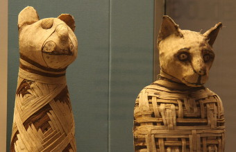 1280px-British_museum,_Egypt_mummies_of_animals_(4423733728)