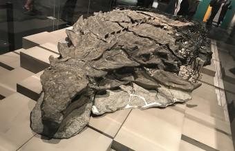 1280px-Nodosaur