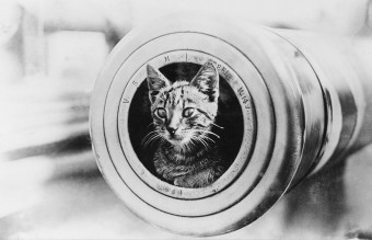 1280px-A_cat_on_HMAS_Encounter