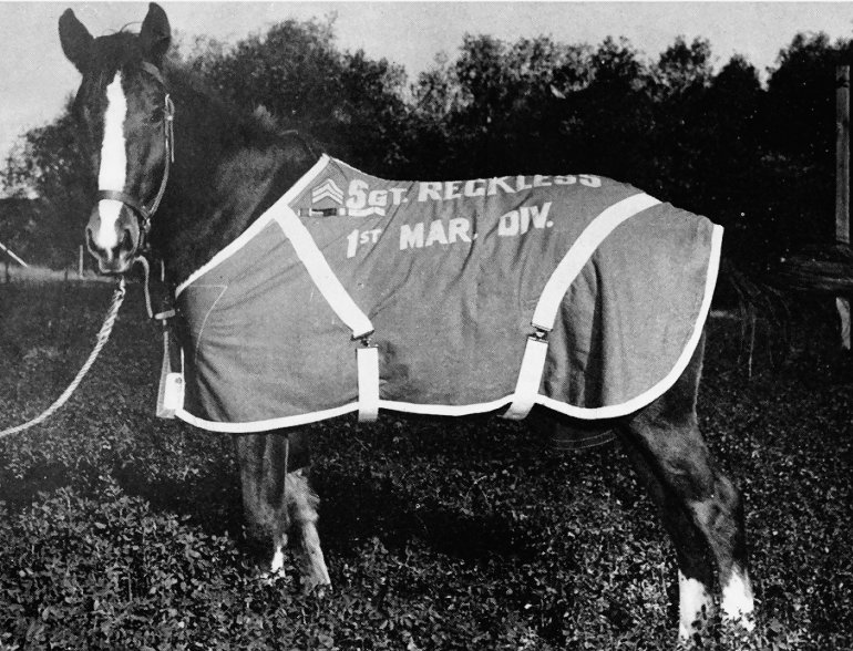 Sgt_reckless_in_pasture