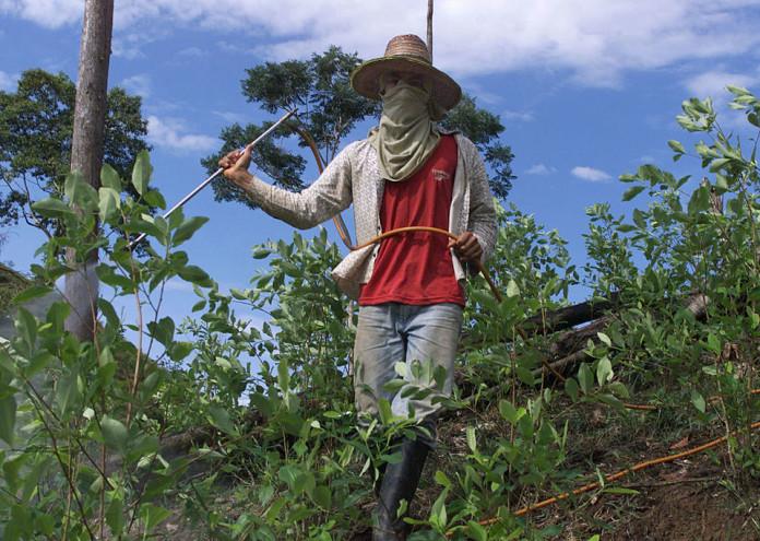 Coca Plantation Farmers