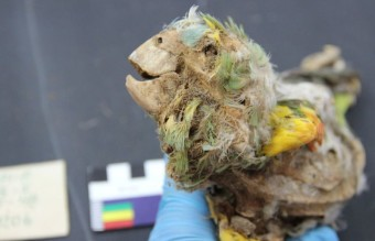 parrot_mummy