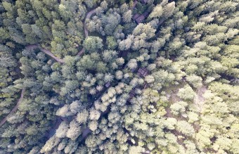 1200px-Aerial_Image_of_Bohemian_Grove_Buildings
