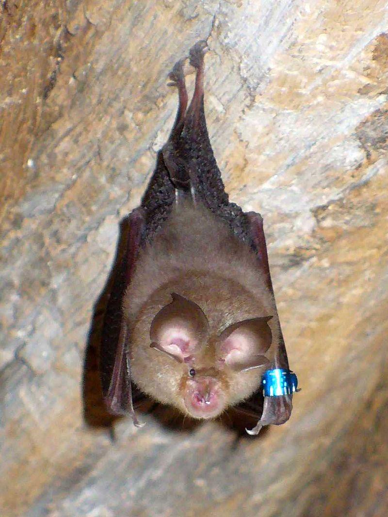 800px-Bat(20070605)