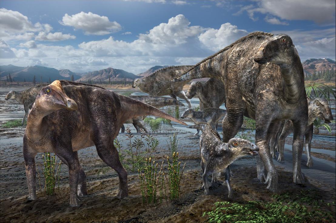 Liscomb_Bonebed_hadrosaurids