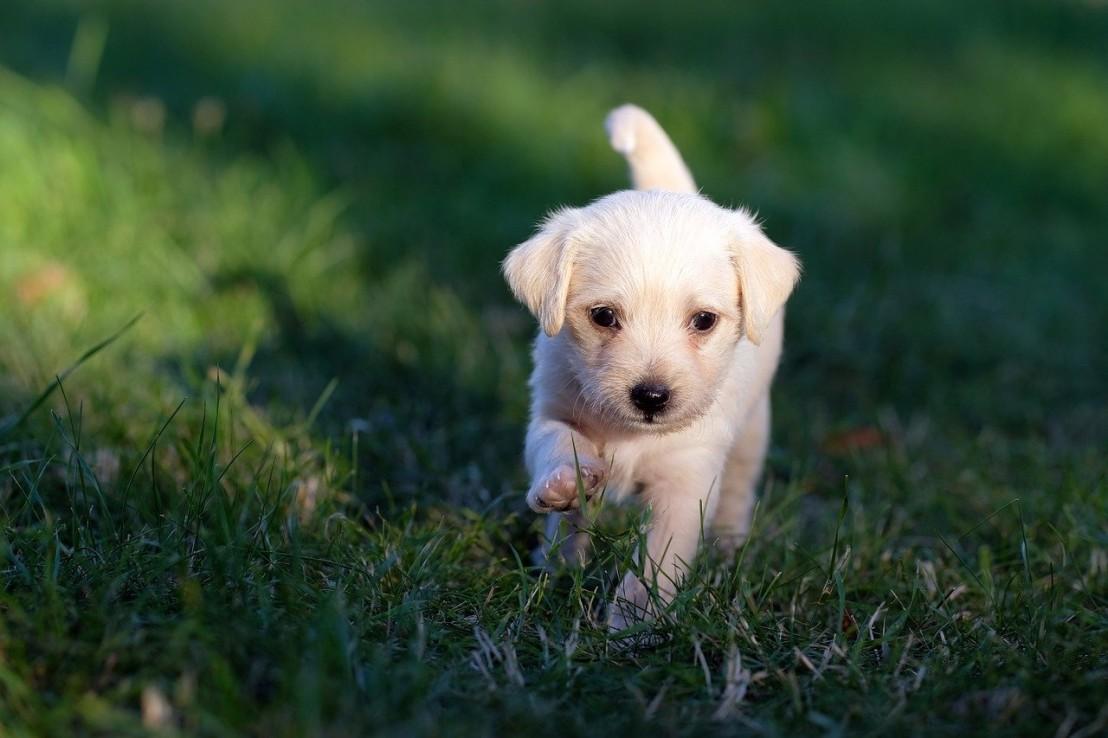 dog-5357794_1280